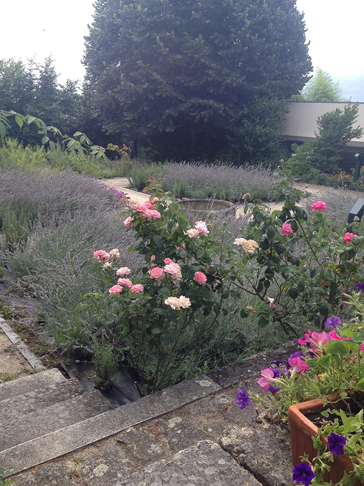 Flores de Verão para jardim